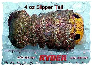 Slipper Lobster Tails (3 oz.)