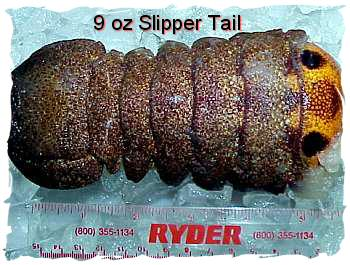 Slipper Lobster Tails (7 oz.)