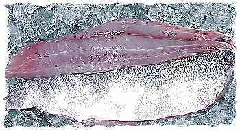 Fresh Bluefish