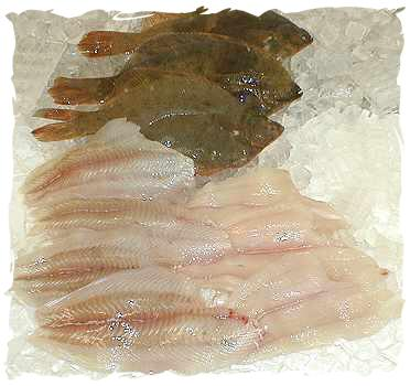 Fresh Flounder, large fillet